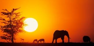 Google'dan Kullanıcılarına Afrika Kıyağı!