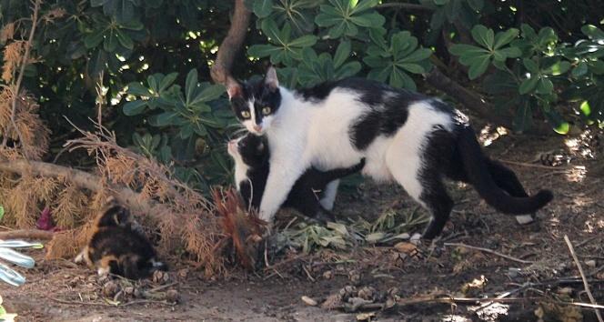 Yavruları mahsur kalan anne kedi insanları yardıma çağırdı
