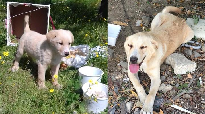 Köpeği önce bıçakladı,gözaltına alındı, serbest bırakıldıktan sonra öldürdü