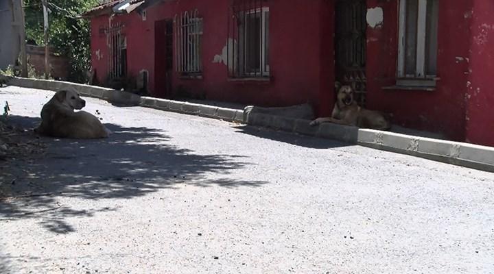 Sokak köpeklerini besleyen aileyi tehdit edip evlerini taşladılar