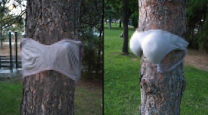 Parkta bulunan ağaçlara kadın iç çamaşırı astılar