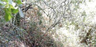Uzun zamandır ormanda saklanan şüpheli JASAT ekiplerince yakalandı