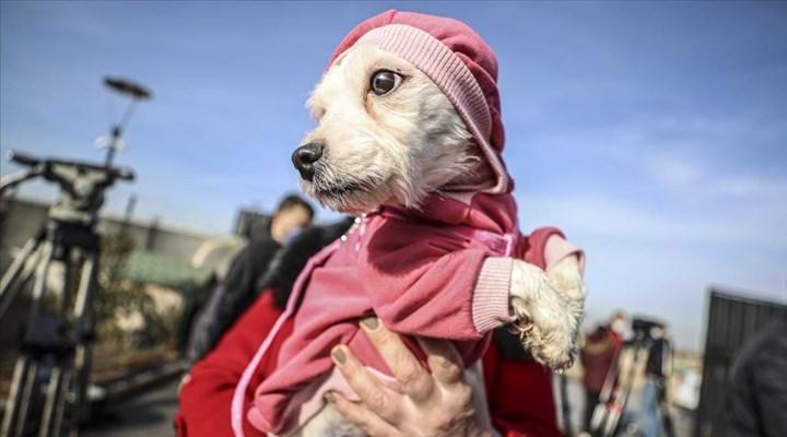 Ses telleri kesilen köpeklerin sahibine 39 köpek için 127 bin 920 lira para 'cezası'