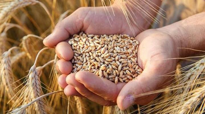 Buğday ithalatı rekor seviyeye çıktı