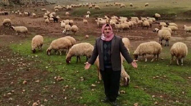 Meraları ellerinden alınan çobanlar dertli: Nereye götürelim bu hayvanları?
