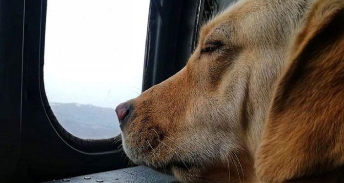 'Görev arkadaşımız Sikorsky içerisinde Bestler Dereleri dinliyor gözleri kapalı'