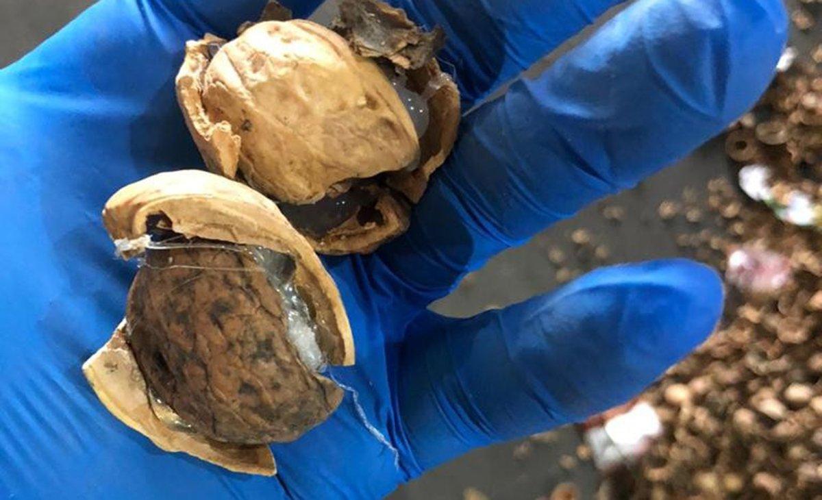 Kabuklu cevizin içerisinden çıkan 153 kilo Afyon sakızı şoke etti