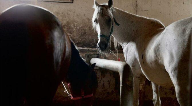 Kaybolan çip'li 99 at için kaymakamlık harekete geçti
