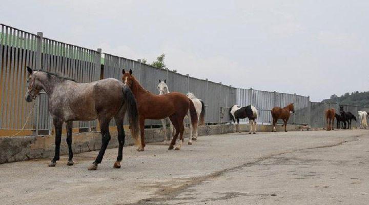 'Kayıp atlar' olayında yeni iddia: 11 öldü kalanlar Ülkü Ocakları'na verildi