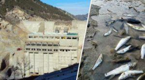 Adana Feke'de kurulu HES'te toplu balık ölümleri