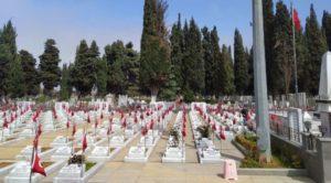 AKP'li Belediye, mermerleri lekeliyor diye mezarlıktaki selvi ağaçlarını kesti