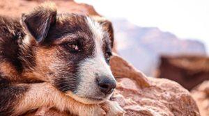 Antalya Serik'te köpeği tabanca ile vuran 2 kişi gözaltına alındı