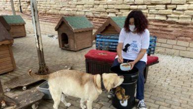 Barınak yöneticisinin sosyal medya hesabını çalıp hayvanseverleri dolandırdılar