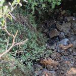 CHP'li vekil Adıgüzel'in iki gün önce balık tuttuğu dere yok oldu