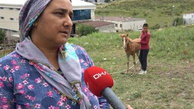 Atlarına kamyonet çarpan aileye Sigorta şirketinden 23 bin 467 liralık tebligat