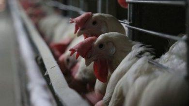 Bolu'da tavuk eti fiyatlarındaki artış yüzde 20'yi buldu