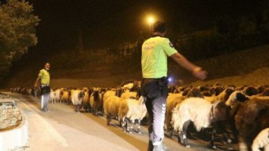 Hakkari-Van karayolundan polis eskortluğunda 10 bin koyun geçti