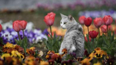 İstanbul'da kedileri pişirip yiyen Japon uyruklu şahıs, sabıkalı çıktı