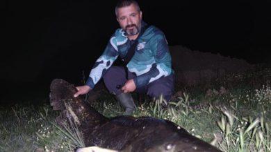 Yakaladıkları dev yayın balığını,ölçüp, hatıra fotoğrafı çekildikten sonra yaşam alanına bıraktılar