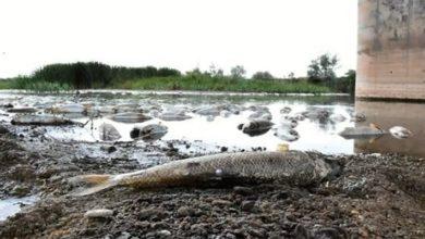 Kızılırmak'ta yaşanan balık ölümlerinin nedeni belli oldu
