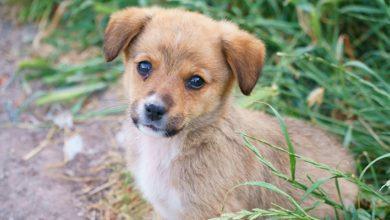 Sarıyer'de 1 aylık yavru köpeği yakarak öldürenler aramızda dolaşmaya devam ediyor