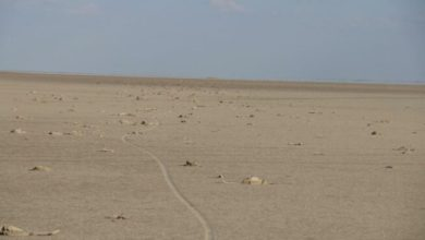 Tuz Gölü kurudu,bin flamingo yavrusu öldü