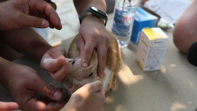 İBB'den yangın bölgelerine veteriner ve mama desteği