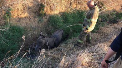 Bandırma'da düştüğü çukurda mahsur kalan eşeği itfaiye kurtardı